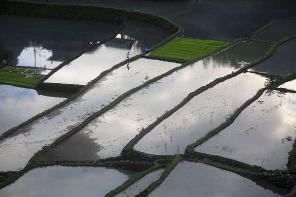 Picture of Rice paddies filled with water seen from the viewpoint west of Batad - Philippines - Asia