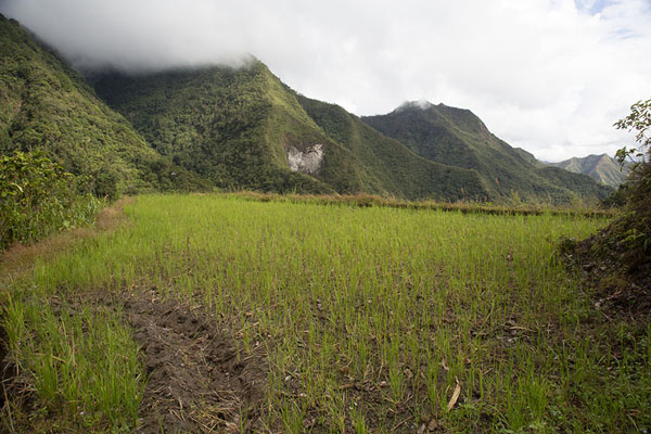 Foto de Rice paddy with mountains in the background in the valley west of Batad - Filipinas - Asia