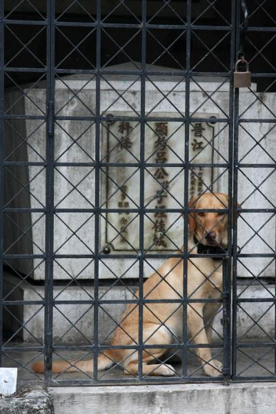 Dog guarding one of the tombs - locked up inside | Cimitero Cinese | Filippine