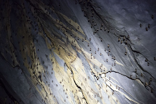 Photo de Bats clinging to the ceiling of the subterranean riverSabang - Philippines