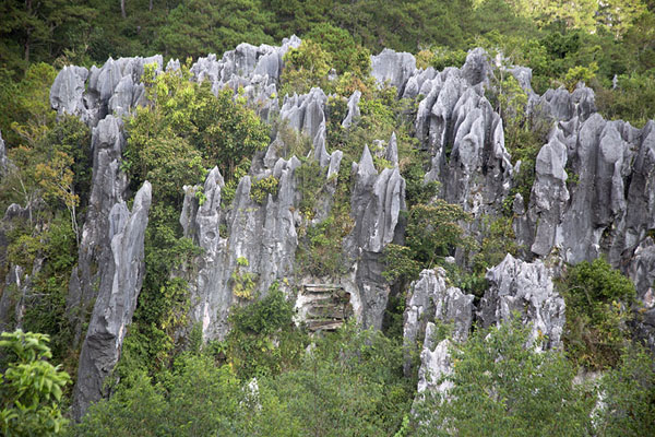 Limestone rock formations with coffins south of Sagada | Hangende doodskisten van Sagada | Filippijnen
