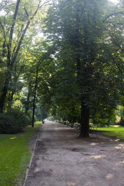 Foto van Tree and lane in Saxon GardenWarschau - Polen
