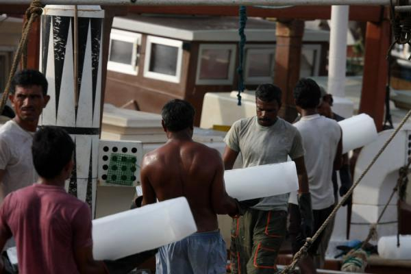 Loading ice on the boat to keep the fish fresh | Al Khor pescatori | Qatar