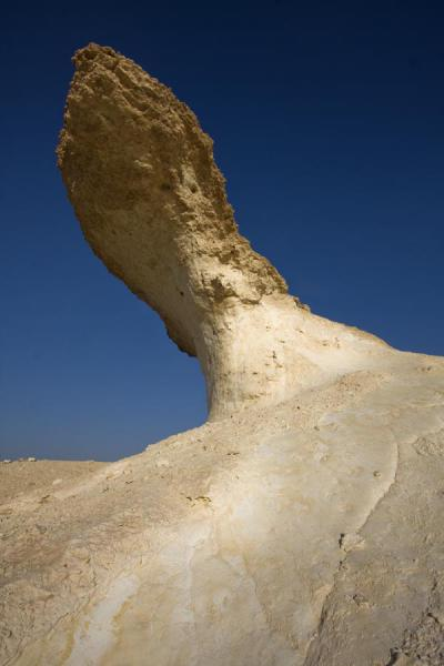 Looking up one of the most prominent desert mushrooms of Bir Zekreet | Bir Zekreet landscape | Qatar