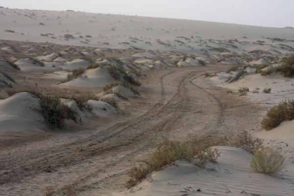 Photo de Small sand dunes in Khor al AdaidKhor al Adaid - Qatar