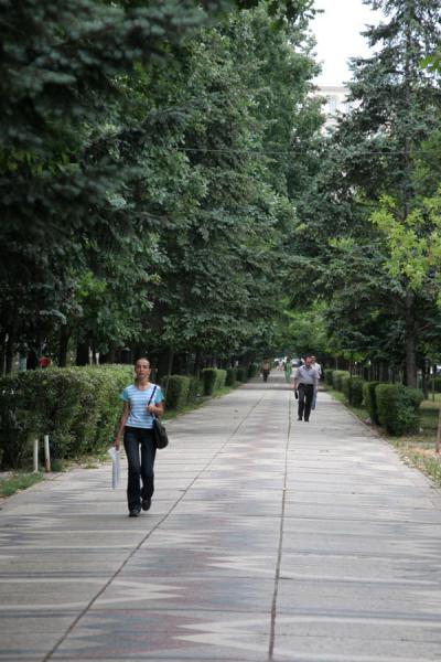 Picture of Union Avenue (Romania): Trees and woman on the Unirii Avenue