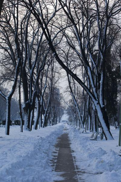 Trees with snow-covered lane in Carol Park | 布加勒斯特 | 罗马尼亚