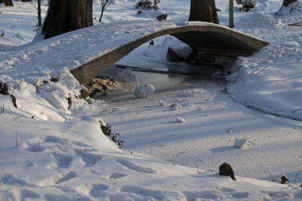 Small bridge over frozen stream in Carol Park | Carol Park | Roumanie