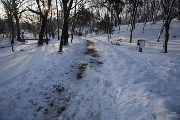 Lane in Carol Park with benches in the snow | 布加勒斯特 | 罗马尼亚