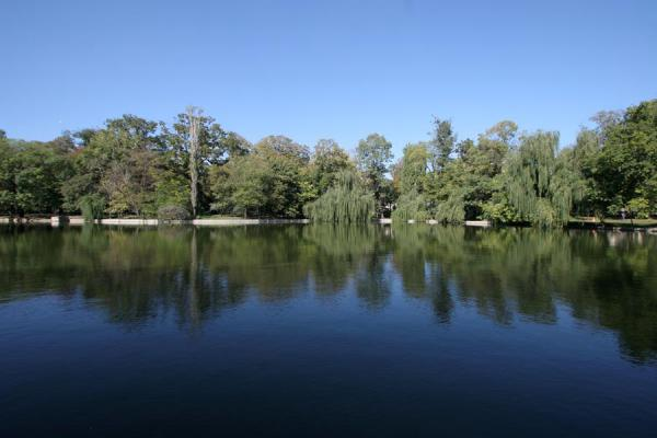 Trees reflected in the lake of Cismigiu Gardens | Cismigiu Gardens | Romania