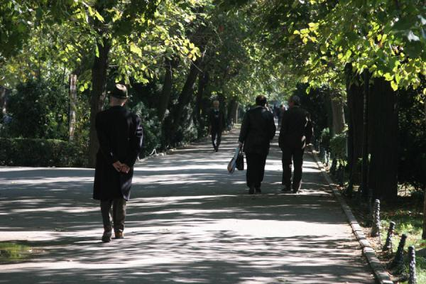 Walking on a shady lane in Cismigiu Gardens | Cismigiu Gardens | Romania