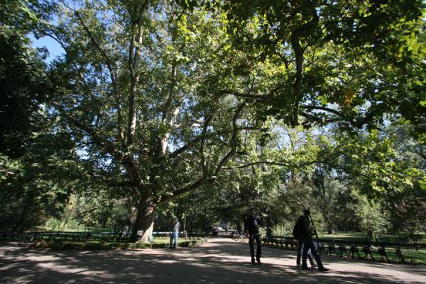 Picture of Cismigiu Gardens (Romania): Romanians under an enormous tree in Cismigiu Gardens