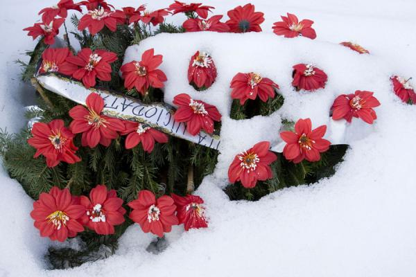 Flowers in the snow of the Cemetery of the Heroes of the Revolution | Cemetery of Heroes of Revolution | Romania
