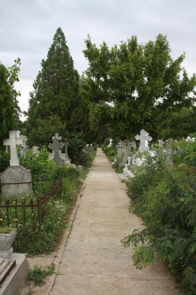 One of the many aisles of Ghencea Cemetery | Ghencea Cemetery | Romania