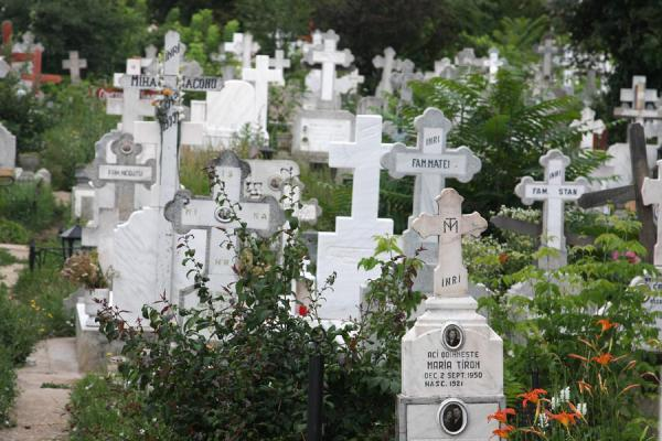 Picture of Ghencea Cemetery (Romania): Tombstones overgrown by the vegetation of Ghencea Cemetery