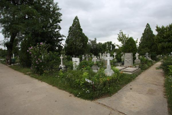 Picture of Ghencea Cemetery (Romania): Aisles, tombs and trees at Ghencea Cemetery