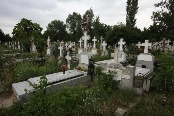 Picture of Ghencea Cemetery (Romania): Graves amidst the vegetation of Ghencea Cemetery