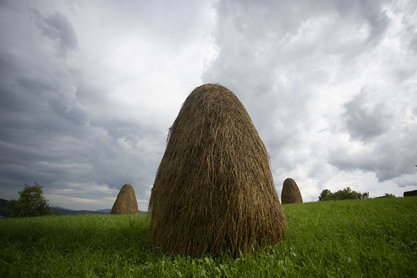 Foto di Haystacks in a field near Poienile IzeiValle Iza - Rumania