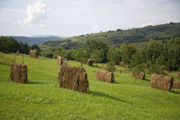 Foto di Rows of haystacks on a hill in Iza ValleyValle Iza - Rumania