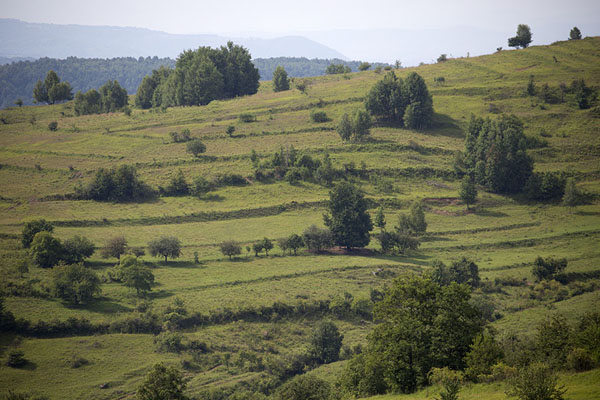 Hill with trees in Iza Valley | Valle Iza | Rumania
