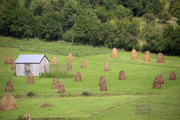 Field full of haystacks near Poienile Izei | Valle Iza | Rumania