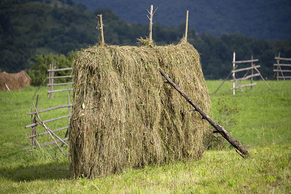 Foto di One of the many haystacks in the Iza Valley landscapeValle Iza - Rumania