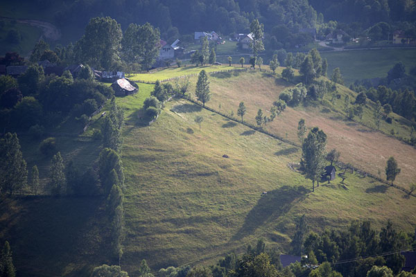 Sunlight shining on a hill with trees | Kalibash villages | Romania