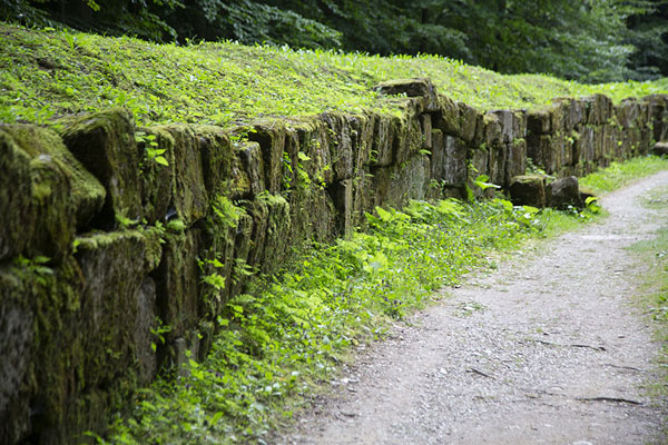 Foto de The moss-covered wall in the outer fortificationSarmizegetusa Regia - Rumania