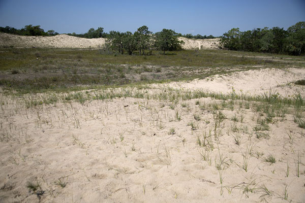 The dunes in Letea Forest | Sulina Danube delta | Romania