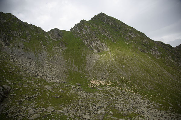 Foto de Flock of sheep on the slopes of the mountains near the passTransfăgărășan - Rumania