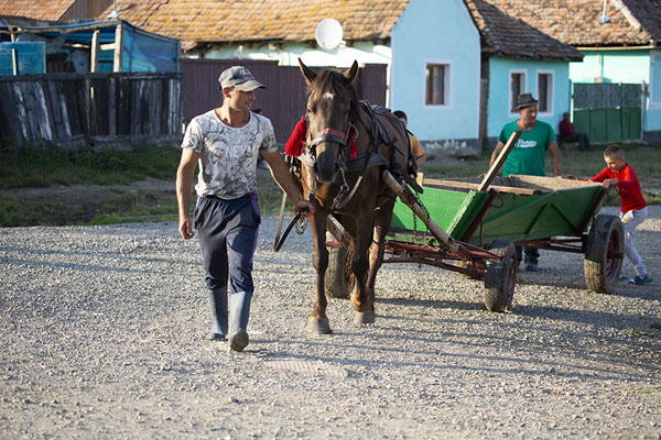 Man walking his horse and cart in Viscri - 罗马尼亚