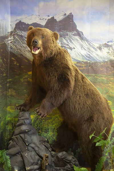 Foto van Life-size stuffed bear depicted in the bear museum - Rusland - Europa