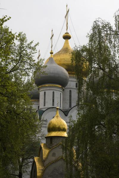Picture of Golden onion-shaped domes of Smolensk cathedral towering above trees and Prokhorov Chapel