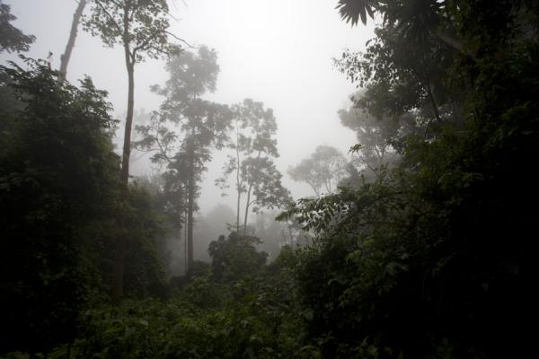 Early morning fog in the Cyamudongo forest | Chimpanzee tracking | Rwanda