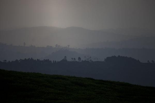 Picture of Gisakura tea plantations (Rwanda): Mountains covered with vegetation in the landscape near Gisakura
