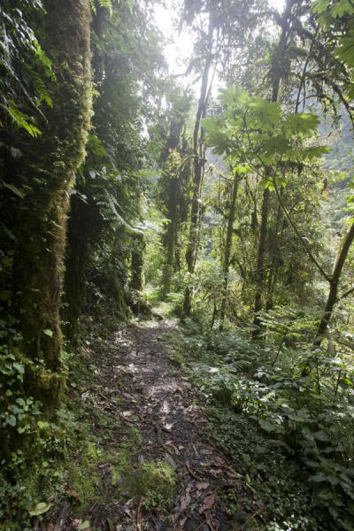 Trail through Nyungwe National Park leading to the main waterfall | Isumo waterfall trail | Rwanda