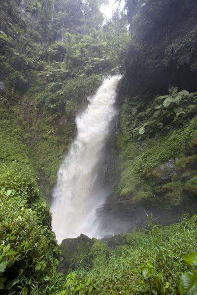 Picture of Isumo waterfall trail (Rwanda): Main waterfall of Nyungwe surrounded by the forest