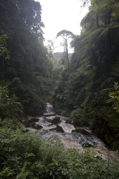 Looking downstream from the main waterfall of Nyungwe | Isumo waterfall trail | Ruanda