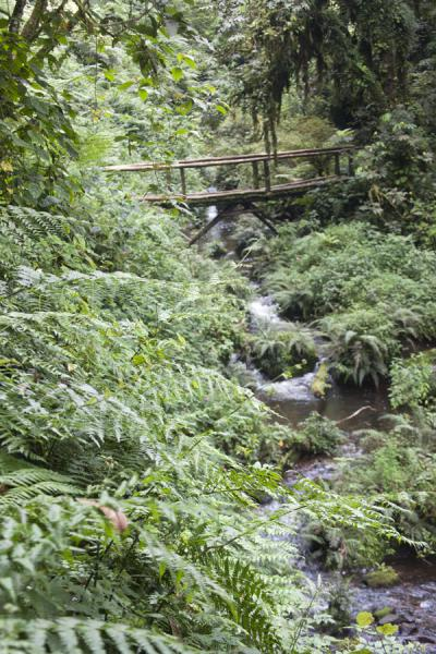 Stream cutting through the forest with wooden bridge | Isumo waterfall trail | Ruanda