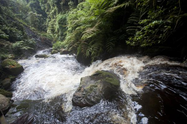 Clear dark water running down one of the valleys of Nyungwe | Isumo waterfall trail | Rwanda