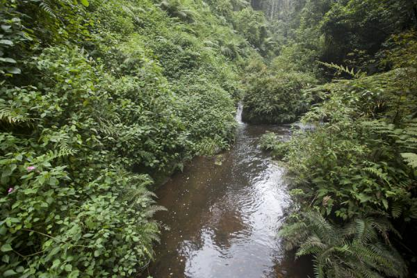 Picture of Isumo waterfall trail (Rwanda): River in Nyungwe Park, seen on the way from the main waterfall