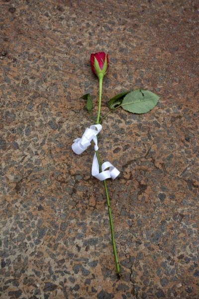Rose on a tomb at the memorial centre in Kigali | Kigali Genocide Memorial Centre | Rwanda