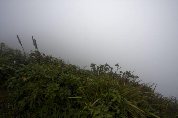The view from the top: clouds where we should have seen the crater of Nevis Peak | Nevis Peak hike | St Kitts en Nevis