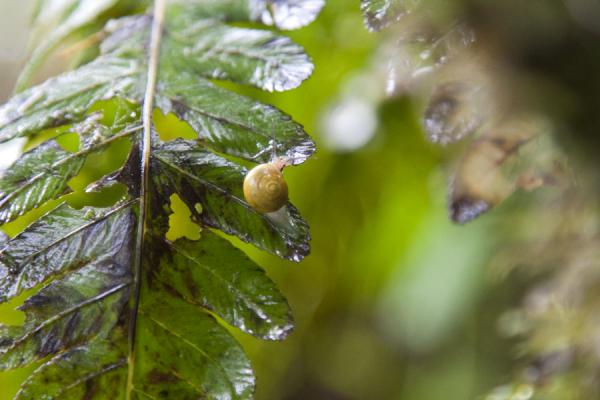 Tiny snail on a leaf in the rainforest | Escalade du Nevis Peak | St Christoph et Niévès