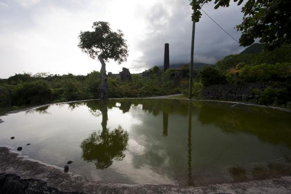 Tree and chimney reflected in water reservoir on New River estate | Plantaciones de Nevis | San Cristóbal y Nieves