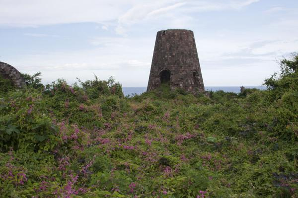 Picture of Nevis Plantations (Saint Kitts and Nevis): Ruins of old sugar mill surrounded by vegetation and flowers at the New River estate