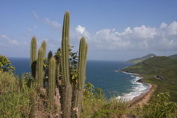 Cactus and view of the eastern side of the southeast peninsula of St Kitts | Péninsule surest de St Kitts | St Christoph et Niévès
