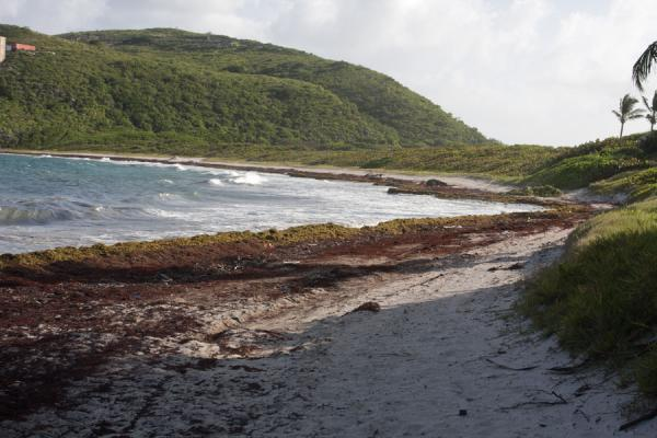 The beach at Sand Bank Bay | Peninsula sureste de St Kitts | San Cristóbal y Nieves