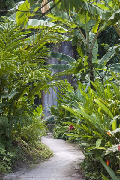 Path leading to the Diamond Fall which is visible in the background | Diamond Botanical Garden | Saint Lucia