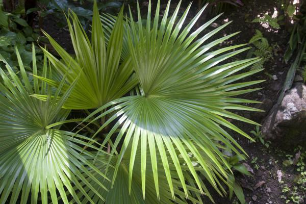 Foto de Exotic plants in the Diamond Botanical GardensDiamond Botanical Garden - Santa Lucia
